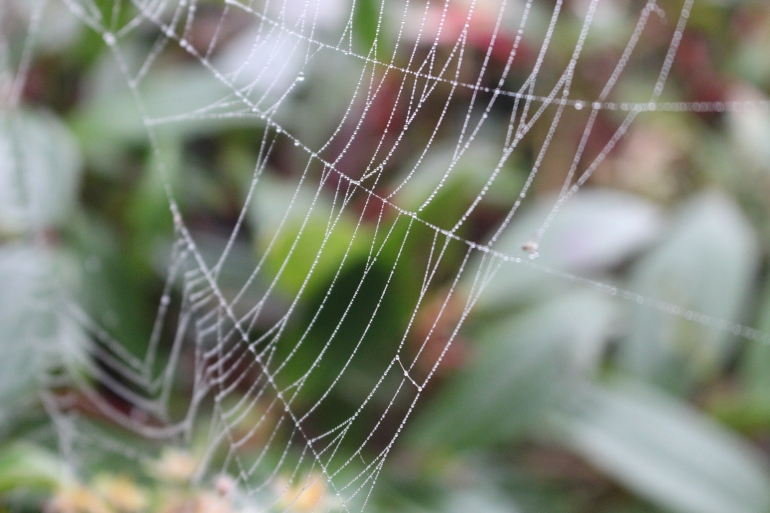 A Spider's Pearl Necklace