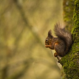 14 - Red squirrel sitting