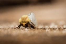 Moth on Wood Texture