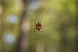 Suspended Spider