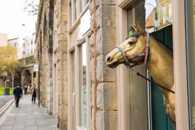 Rebecca Gibson Newcastle Horse