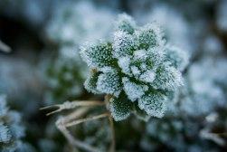 Rebecca Gibson Macro Leaf Frost