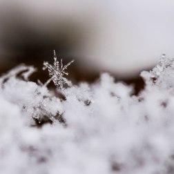10 - Snowflake