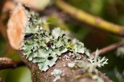 Lichen Texture