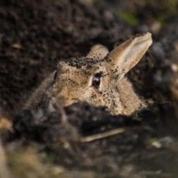 17 - Rabbit
