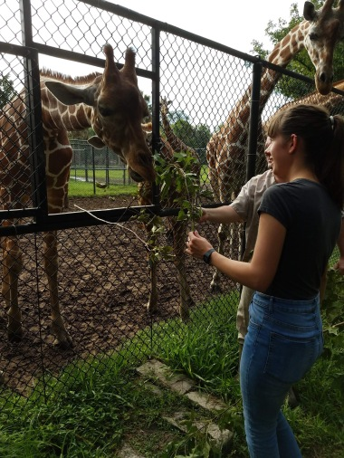 Meeting the giraffes of Jacksonville