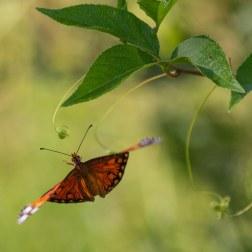 22 - Butterfly