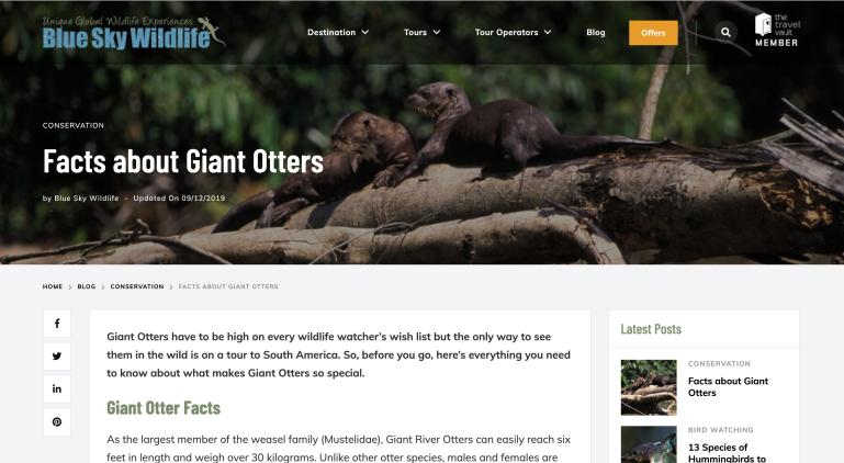 5) Blue Sky Wildlife Otters